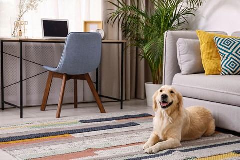 Pet dog at home by couch l Rancho Cordova, CA Avion Apartments logo