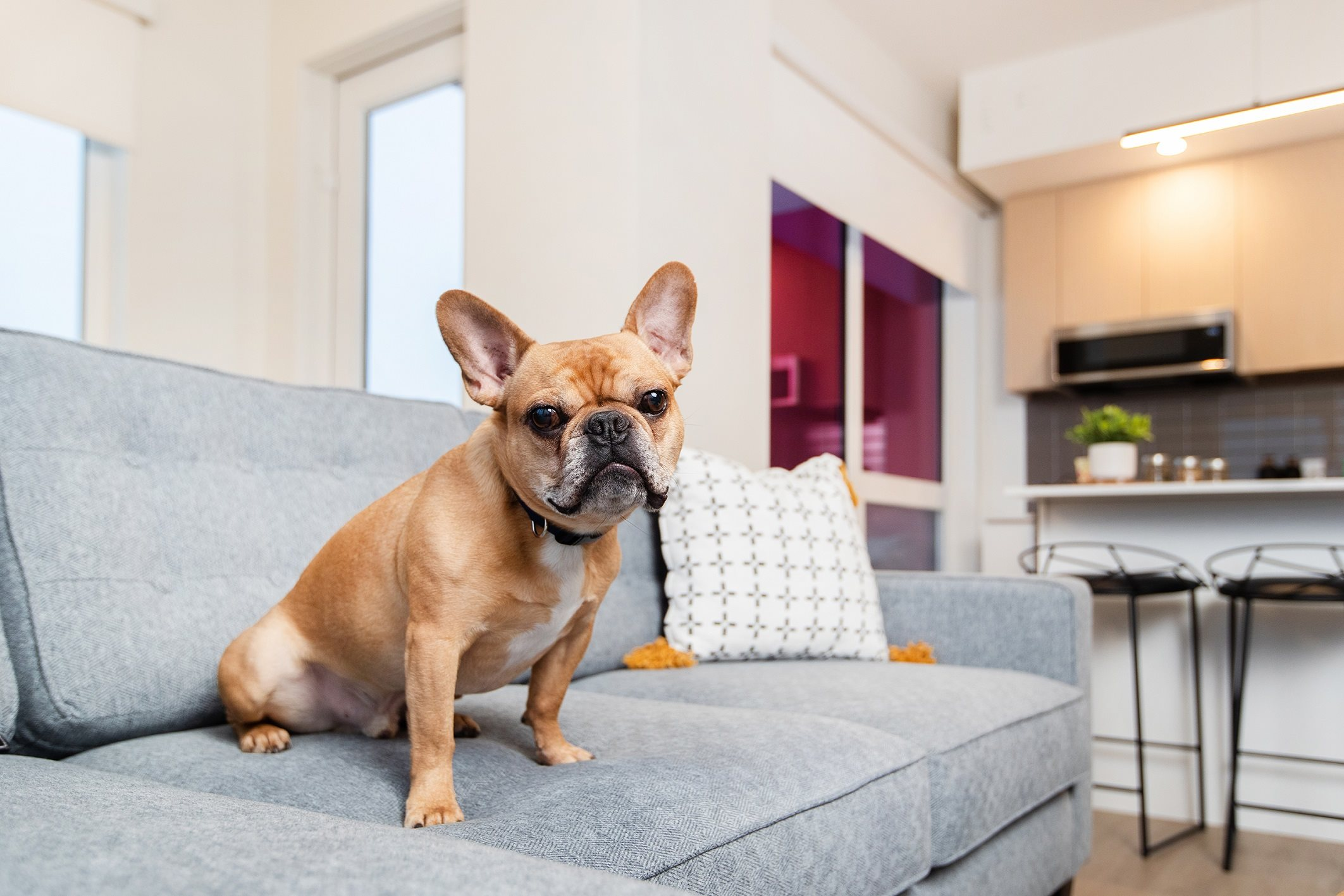 Pet-Friendly Apartments Southpark