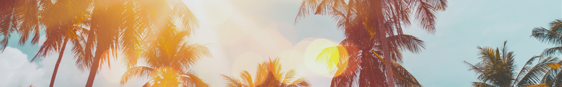 Stock photo of palm trees