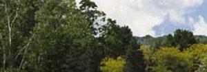 Beavercreek banner 1