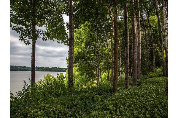 Lake Susan Views