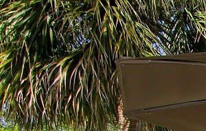 Jacksonville background 1