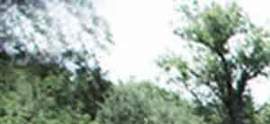 Sherwood Forest Estates background 1