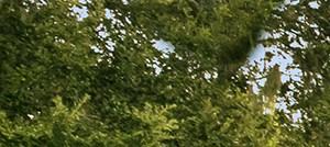 Sarasota banner 1