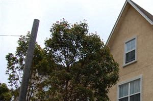 Hayes Valley exterior