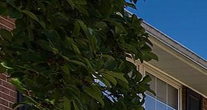 Arlington homepagegallery 8