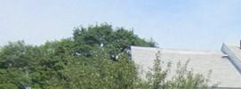 Taunton banner 1