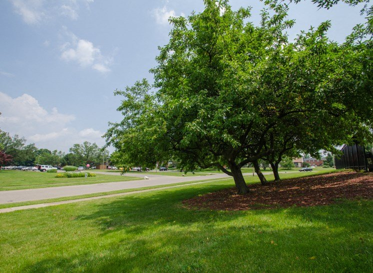 Apartments in Fairborn, OH Tree