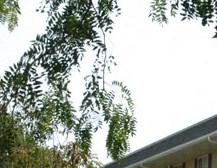 Kankakee homepagegallery 2