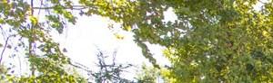 Wilmington banner 1