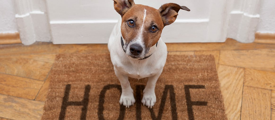 Dog on Welcome mat for Newmoor Properties