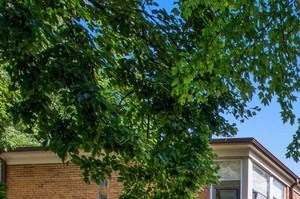 2103-23 W. Berwyn Ave. 1-3 Beds Apartment for Rent Photo Gallery 1