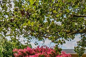 Huntersville photogallery 7