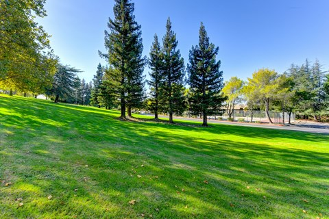 Outdoors with grass, trees and sunshine