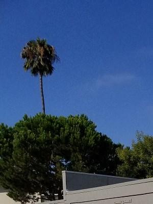 Inglewood photogallery 15