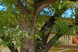San Antonio photogallery 20