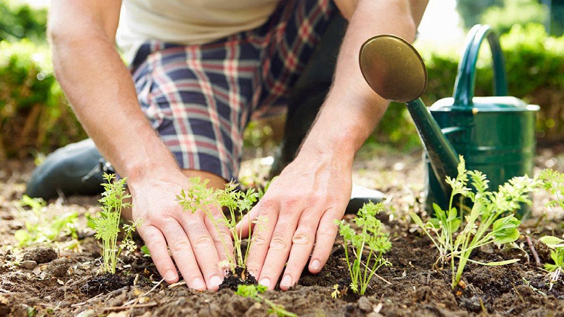 Outdoor Garden Plots