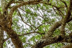 San Antonio photogallery 11