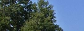 Albany Woods
