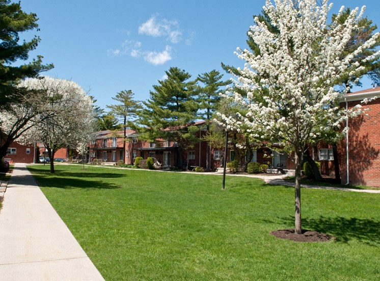 Lawn area with cherry blossoms at Troy Hills Village, New Jersey