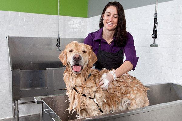 Dog Wash Station at Verde Point