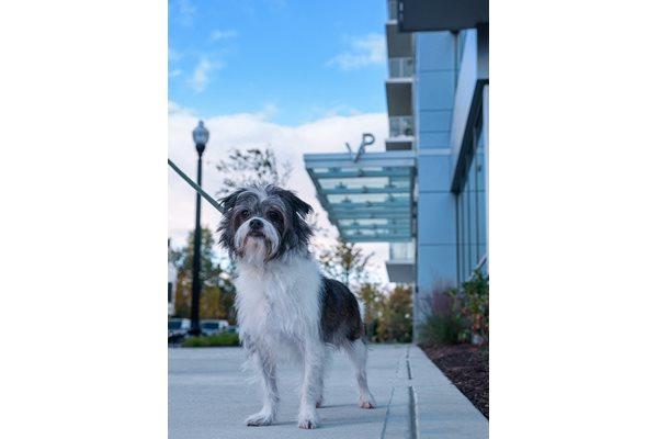 Pet Friendly Apartments in Arlington Virginia