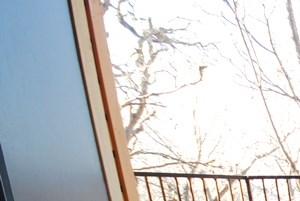 Treehouse Apartments, 2501 Wickersham Ln, Austin, TX