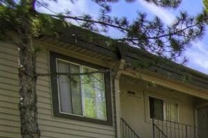 Beautiful Surroundings at Pine View Village Apartments, Flagstaff, AZ,86001