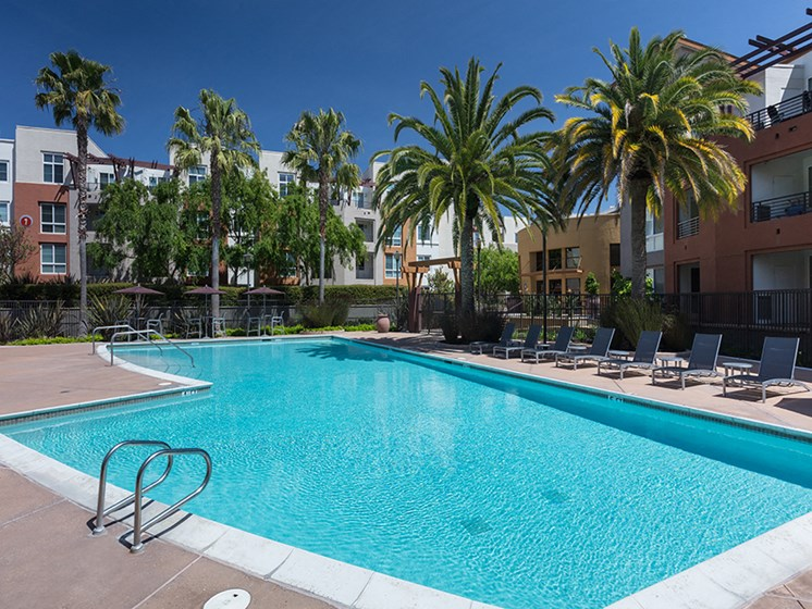 large pool with surrounding palm trees