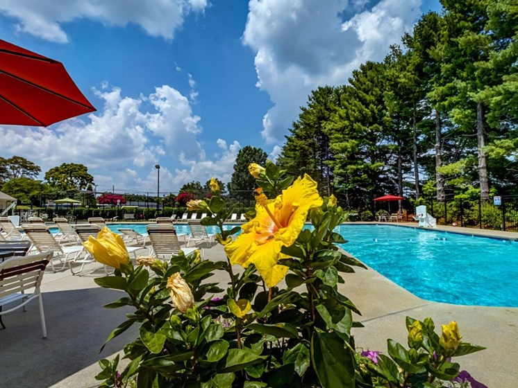 Poolside Entertainment Area at Walden Pond Apartment Homes, Lynchburg, VA, 24501