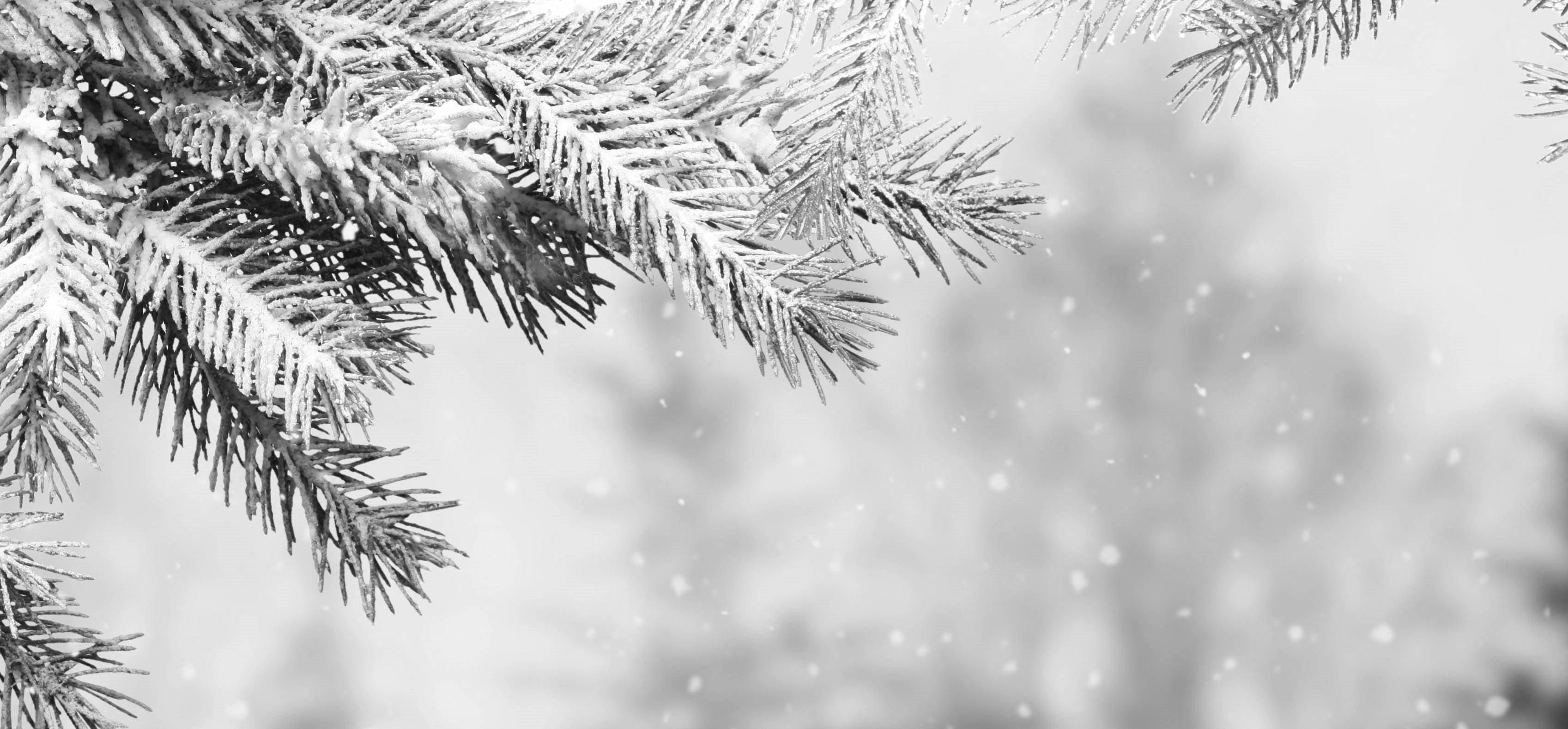 Stock image-winter