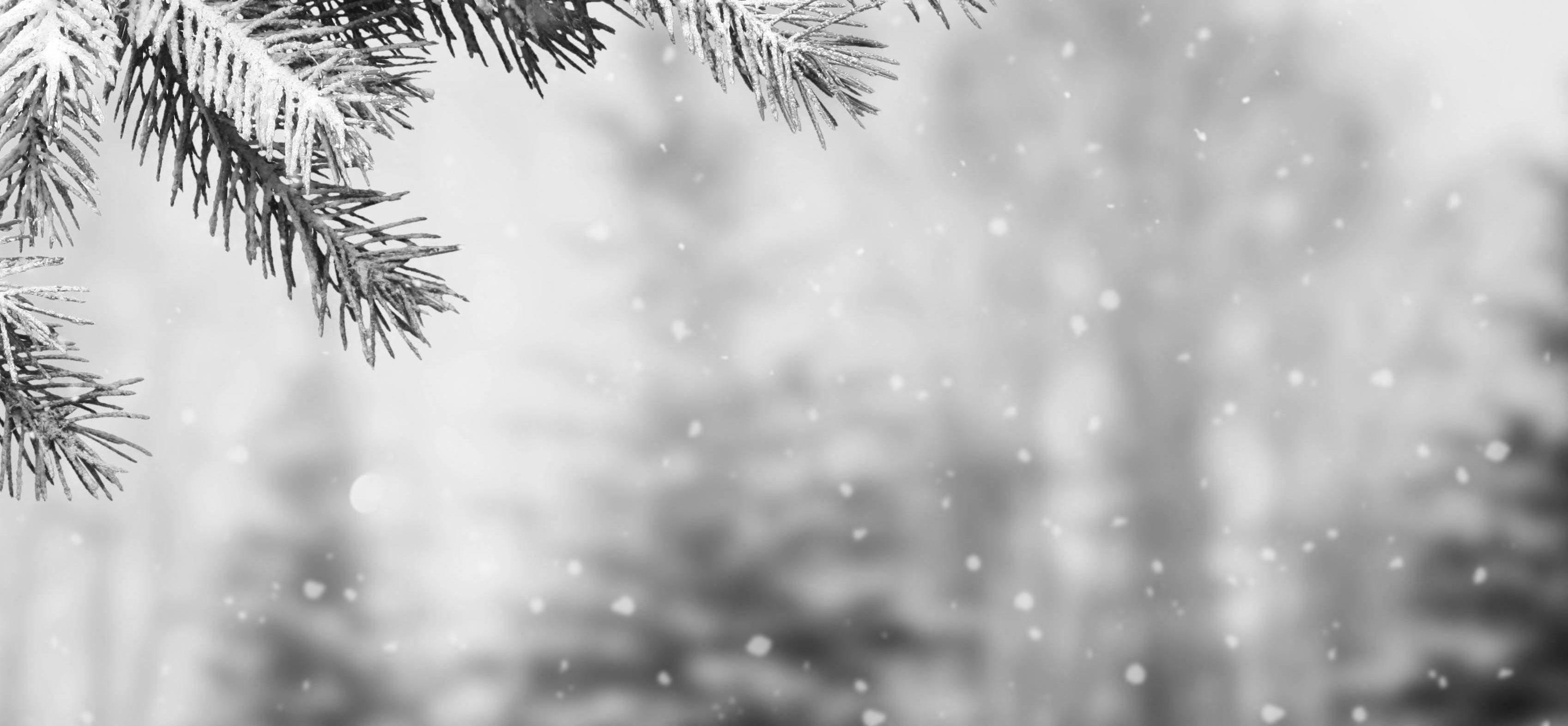 stock image- Winter