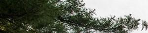 Riverdale banner 1