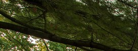 Riverdale homepagegallery 2