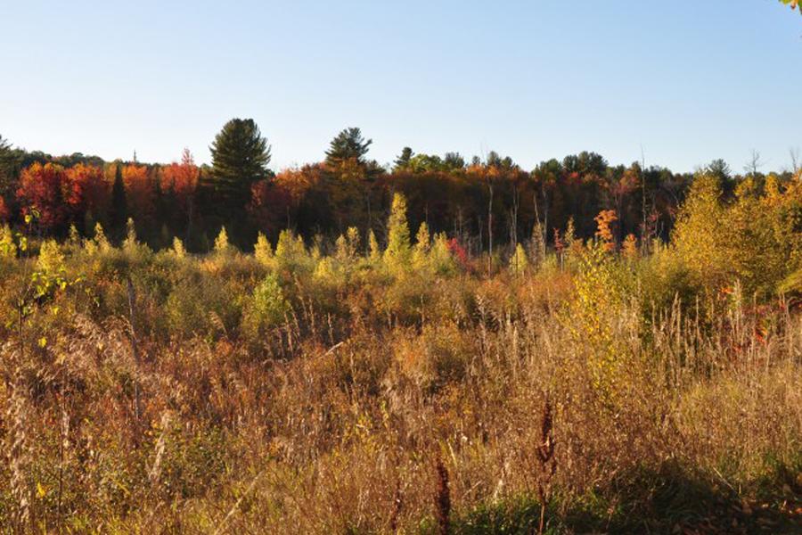 Beautiful Outdoor Space at Stonefarm, New Hampshire, 03766