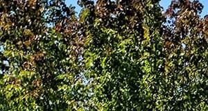 Beautiful Surroundings near Mission Pointe by Windsor, 1063 Morse Avenue, Sunnyvale, CA, 94089