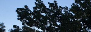 Bayside Arbors homepagegallery 2