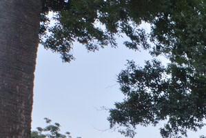 Bayside Arbors background 1