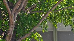 Westdale Hills Apartment Homes, Pinehurst, Bedford, Euless, Texas, TX