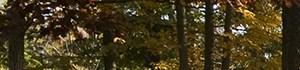Herndon banner 1