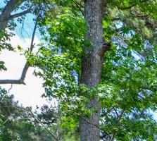 Jonesboro homepagegallery 3