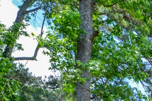 Well maintained buildings and landscaping at The Woods at Southlake Apartment Homes   Friendly staff   Jonesboro, GA 30236
