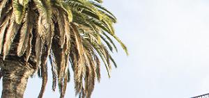 Los Angeles homepagegallery 4