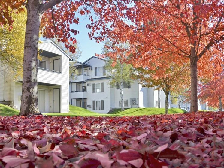 WA_SpokaneValley_VillageonBroadway_Leaves