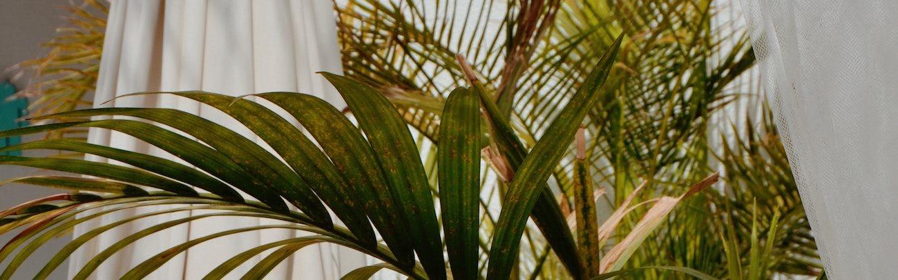 Le Parc Palms