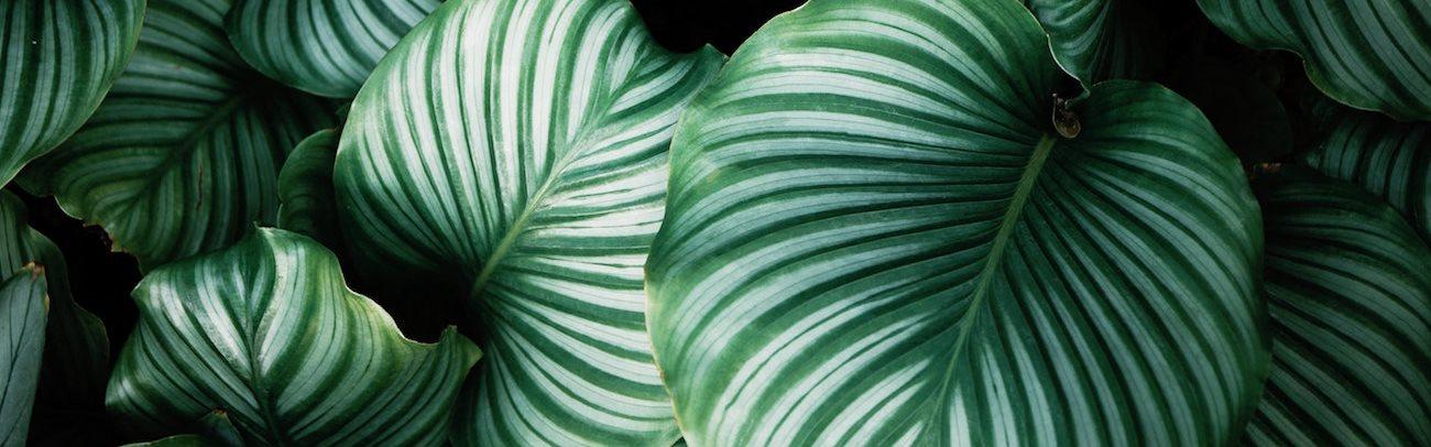 Greenhouse Palms
