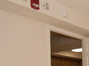 2 Bedroom Apartment- Bedroom 2