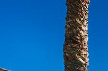 Phoenix homepagegallery 5