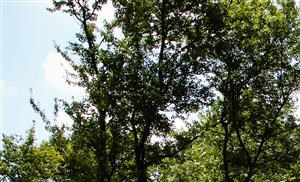 Roper Mountain Woods Apartments 1101 Roper Mountain Road