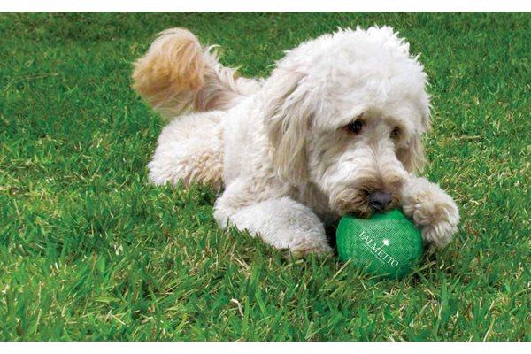 Exclusive Dog Park at Ultris Oakleaf Plantation, Jacksonville, FL,32222